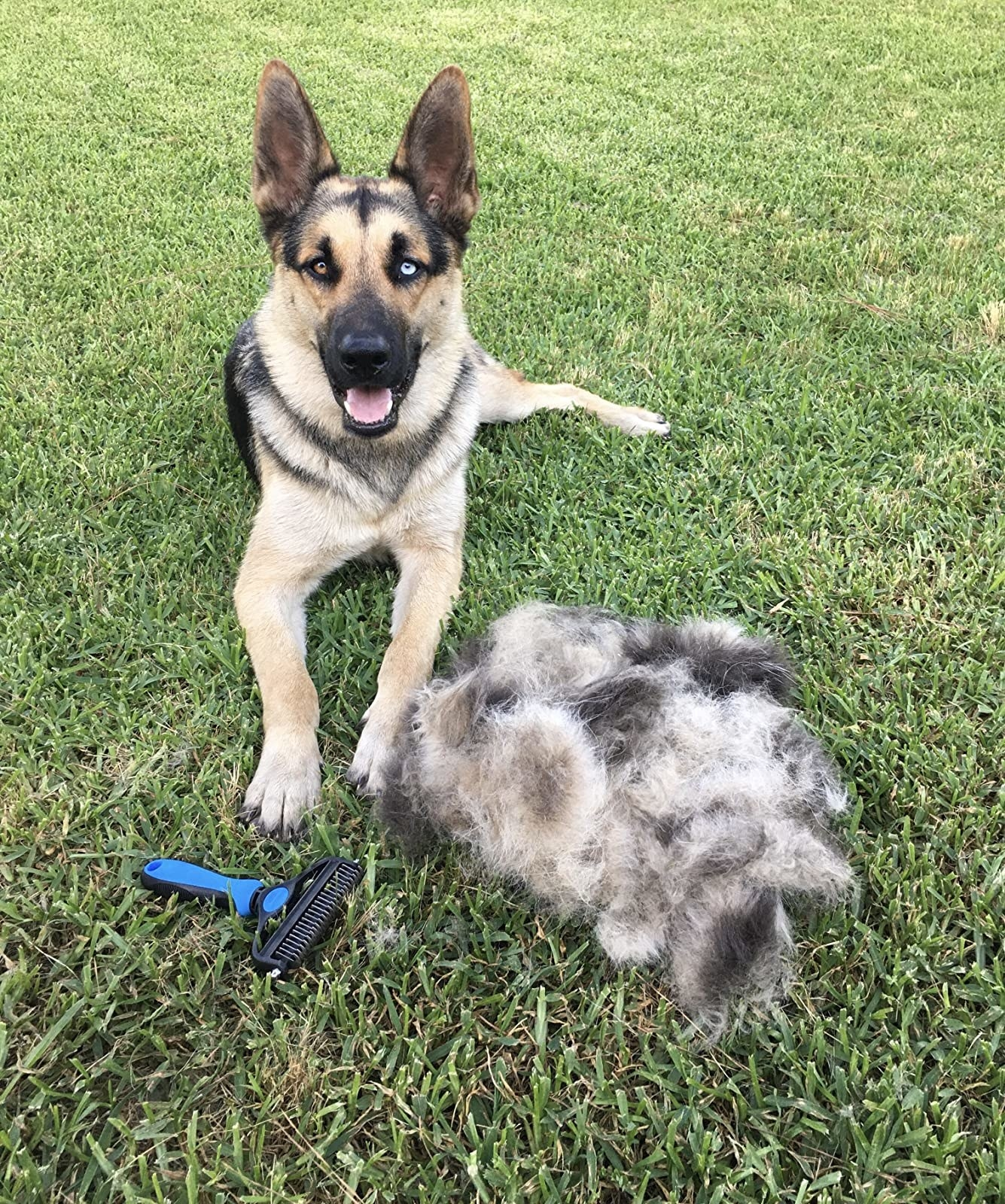 reviewer's german shepherd/husky mix sitting next to the brush and a huge pile of its fur