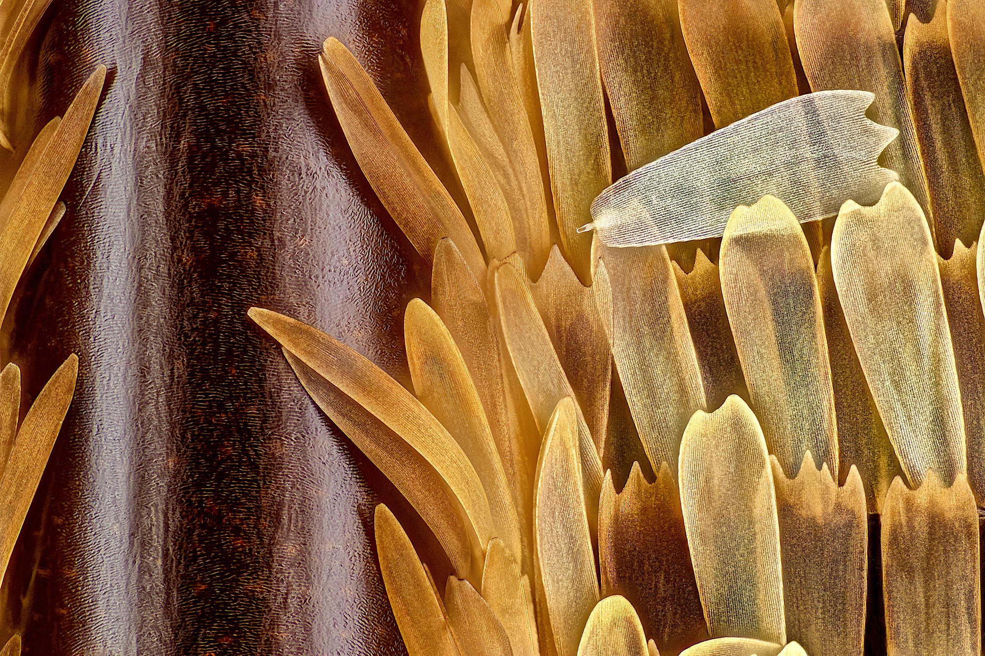 A close-up of a butterfly wing with scales