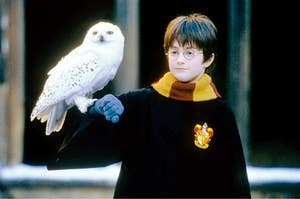 harry with an owl on his arm