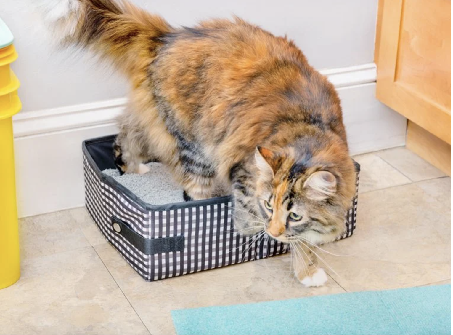 Cat climbing out of a black and white gingham litter box