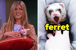 On the left, Rachel from Friends holding a pillow with a hairless cat on it, and on the right, a ferret holding someone's finger