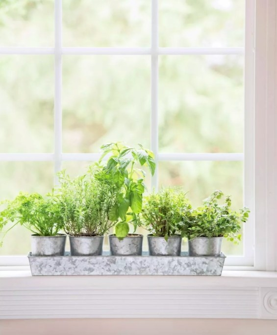 Pots in tray, filled with herbs.