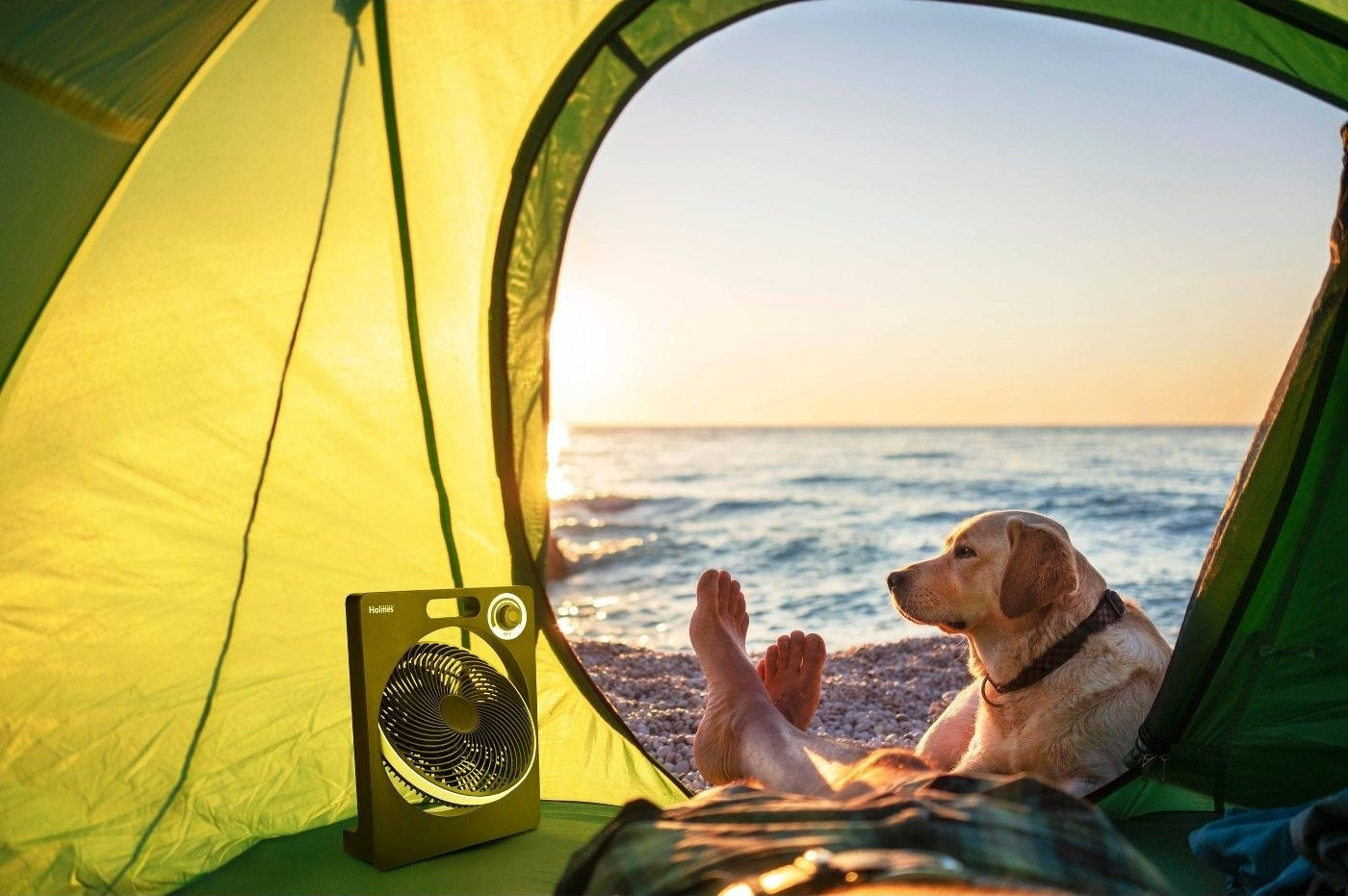 the fan in a green tent set up on the beach with a dog