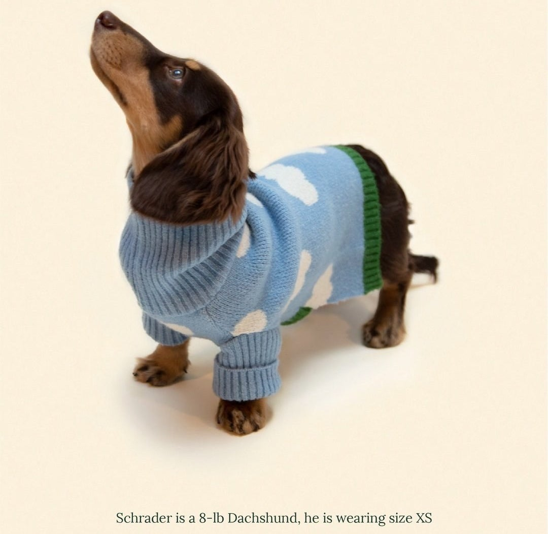 an 8-pound dachshund named Schrader wearing the blue sweater with white clouds on it in a size XS