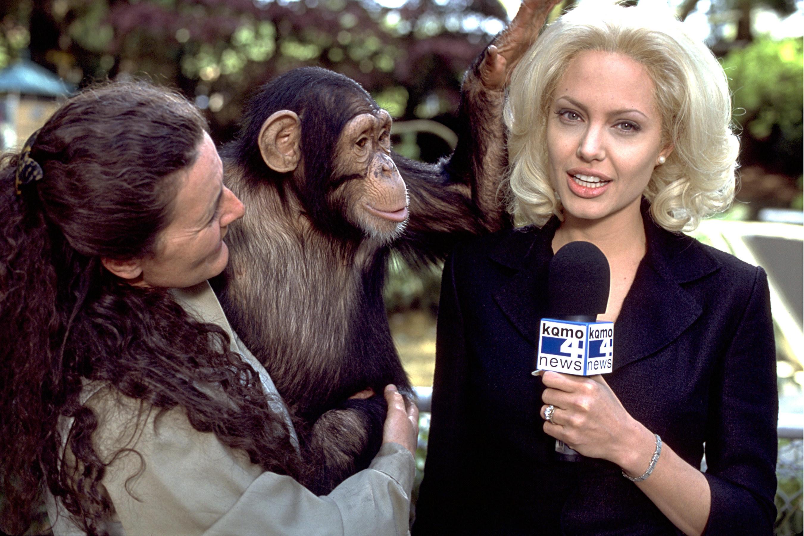 Angelina Jolie interviews a chimpanzee