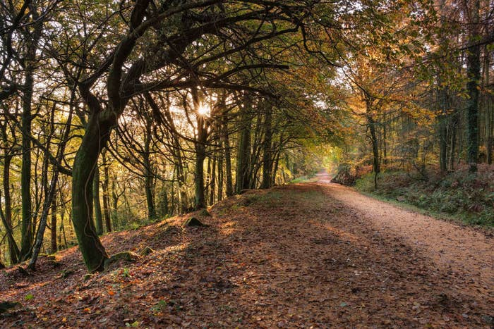A hiking path during fall.