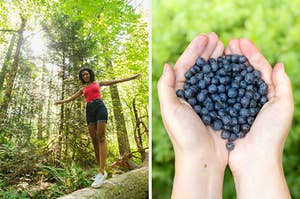 On the left, someone balancing on a log in a sunny clearing in the forest, and on the right, someone holding blueberries in their hands