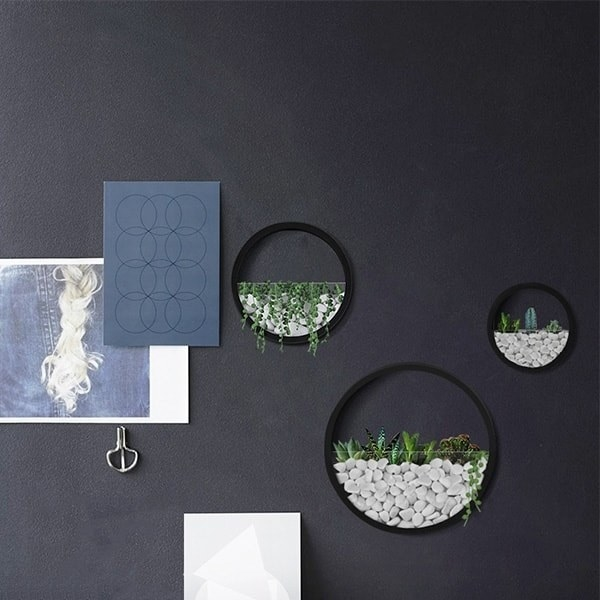 The circular wall planters in different sizes hanging on a wall