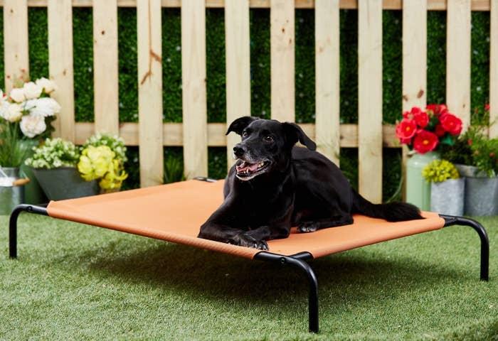 black doggie lying on elevated orange dog bed