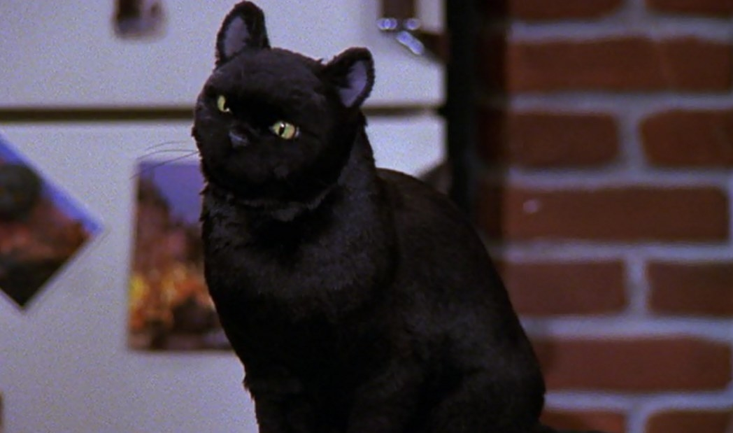 Salem sits on the kitchen counter