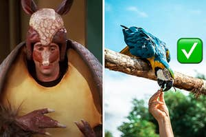 Ross is dressed as an Armadillo on the left with a man feeding a bird on the right with a check box emoji