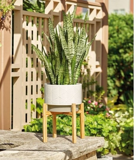 ivory ceramic planter with stand and plant inside