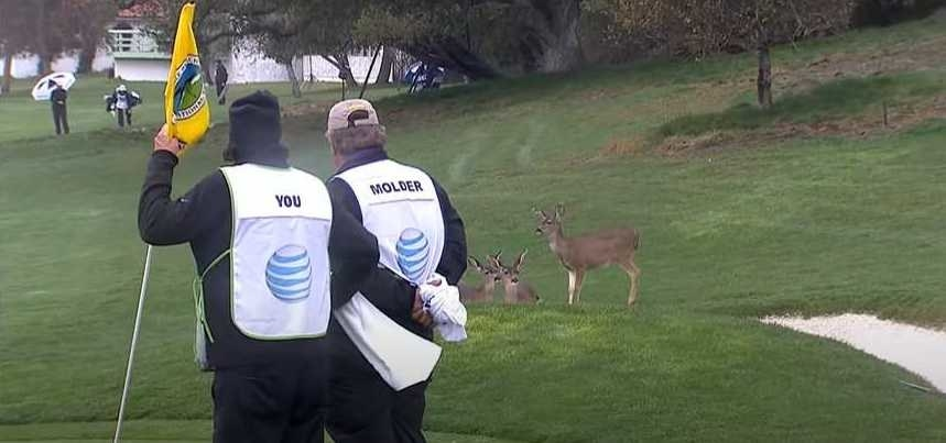 Deer gather on a golf course while caddies look on