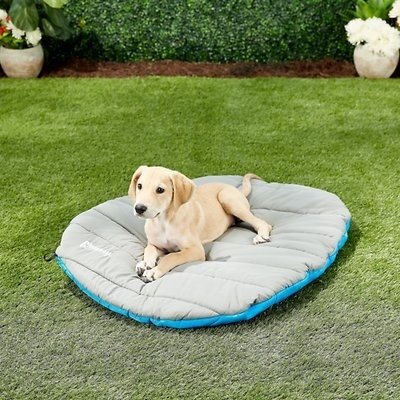 little pup resting on travel bed on the grass