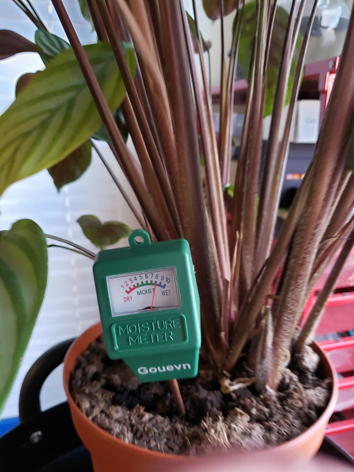 the meter with markings from 1-10 dry to moist to wet in a reviewer's plant pot
