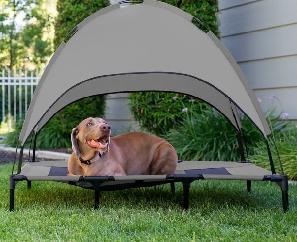 big brown dog lies in outdoor elevated dog bed with roof