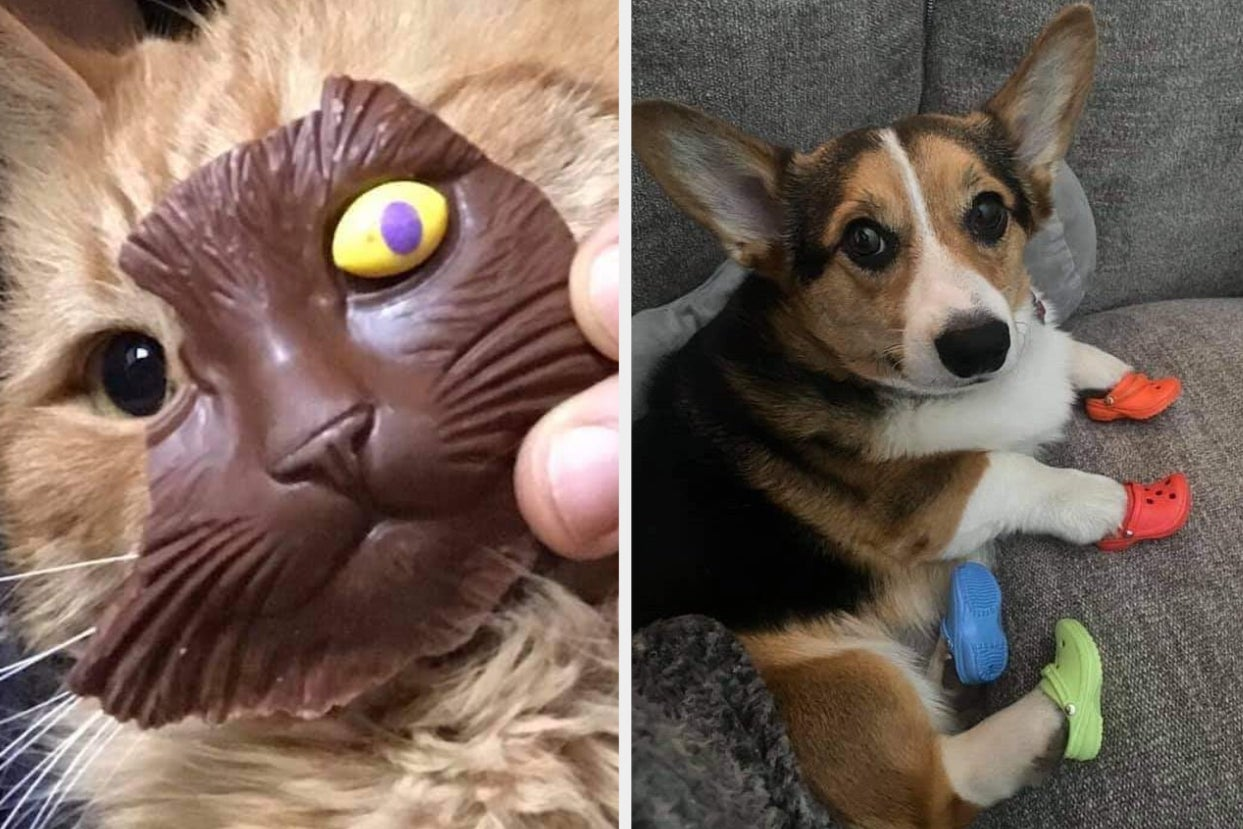 15 Animal Tweets That I Hold Near And Dear To My Heart, And I Think You Will Too
