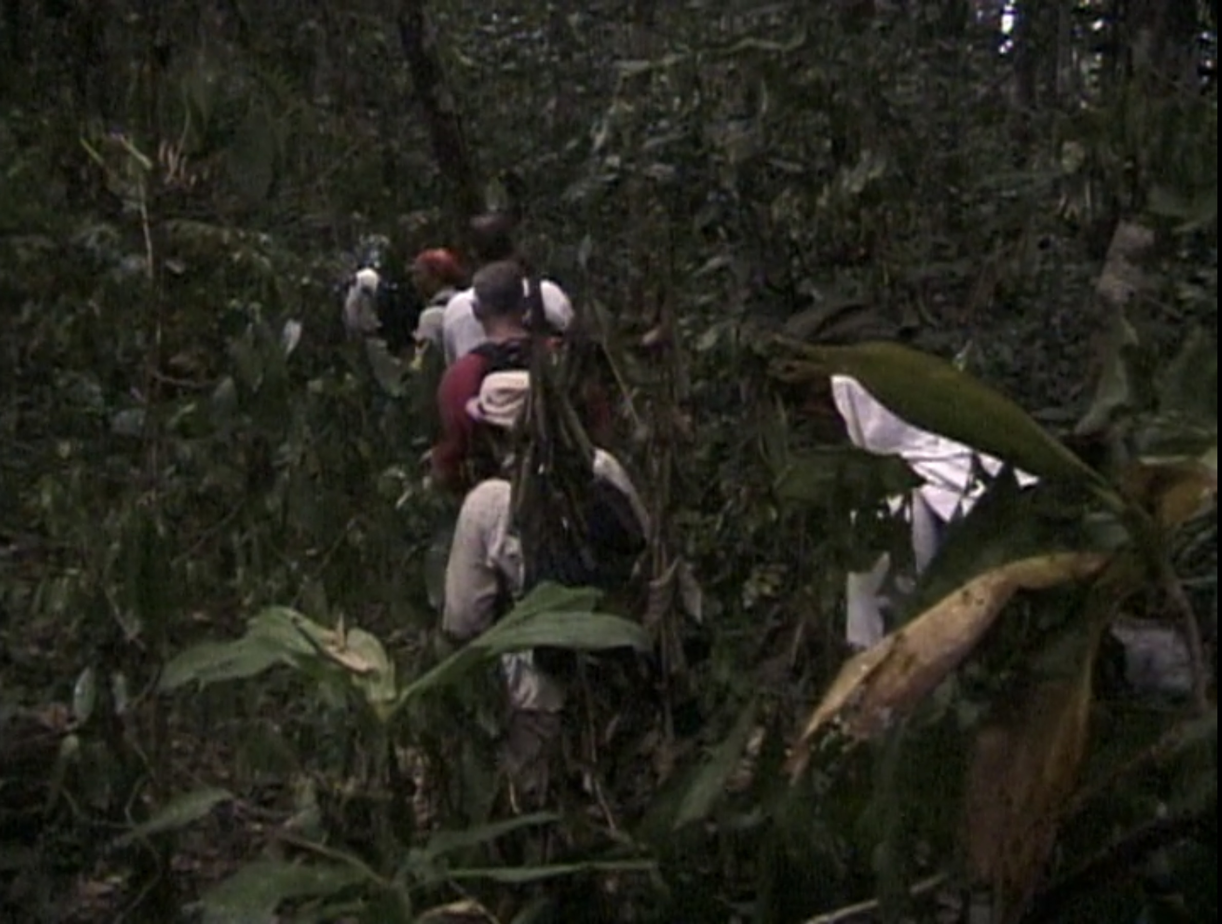 A tribe hikes through the dense forest on Survivor: Borneo