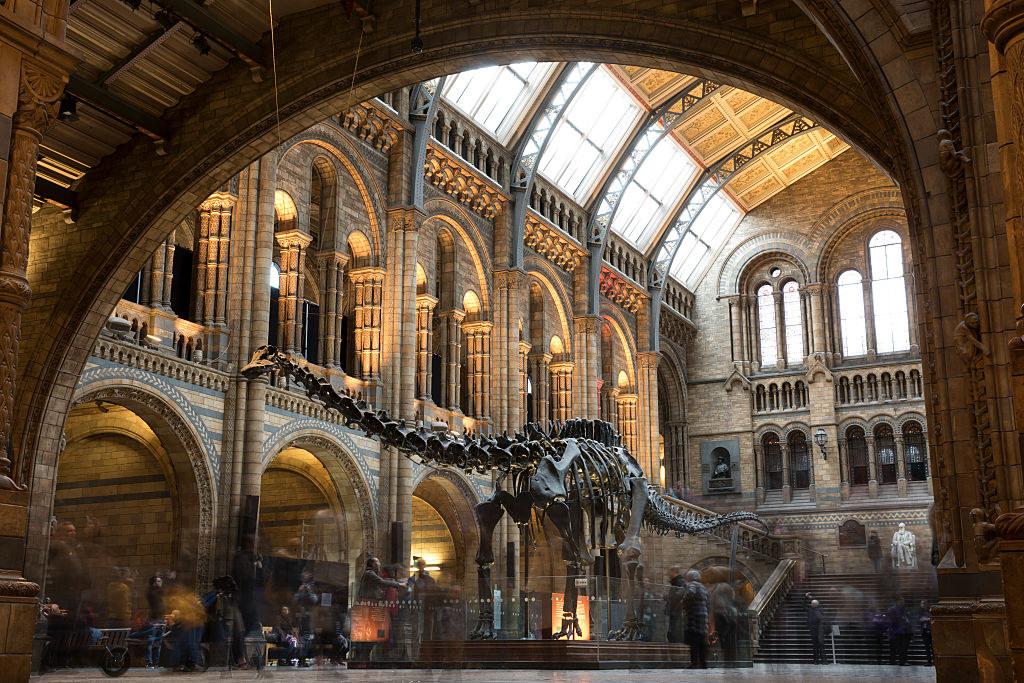 giant dinosaur skeleton inside natural history museum