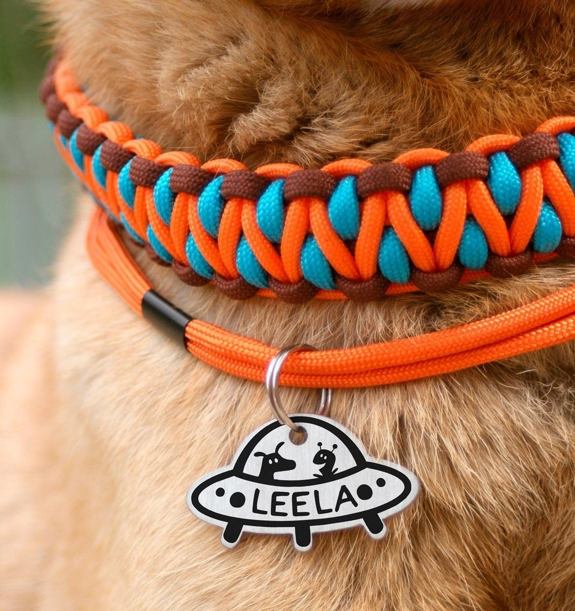 dog wearing tag with a UFO design and their name inside the UFO