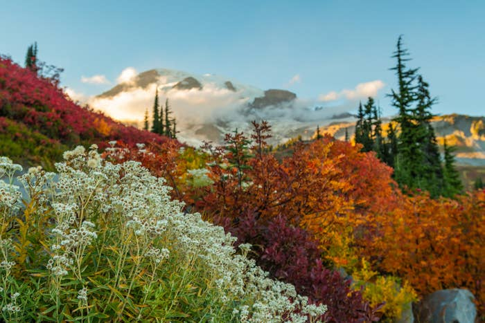 Mount Rainier National Park during the fall