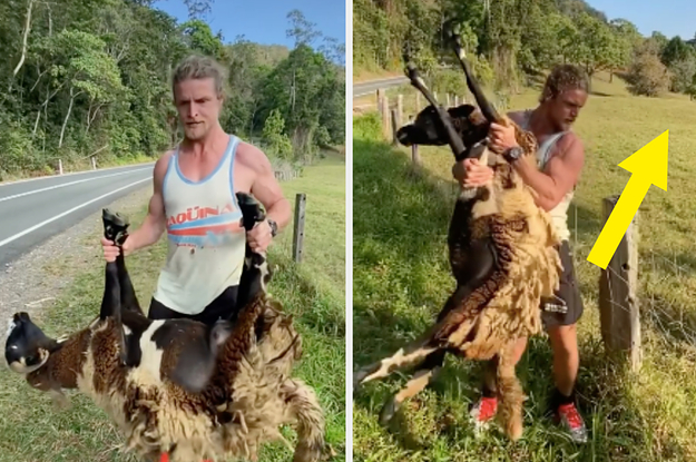 An Australian Man Is Going Viral For Saving A Sheep From A Barbed Wire Fence And Honestly, It's Been The Best Two Minutes Of My Week So Far