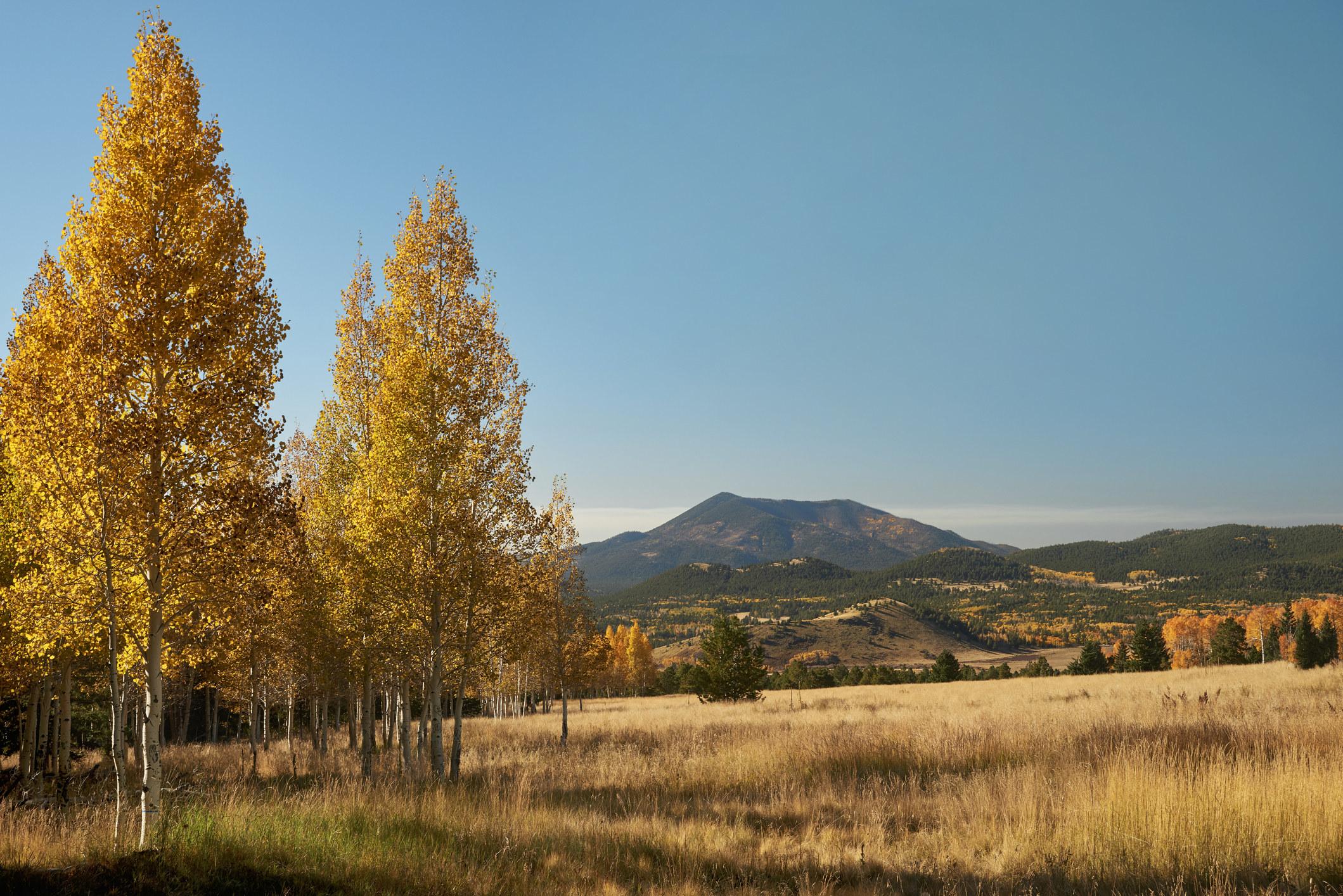 Flagstaff Arizona mountains and aspen trees