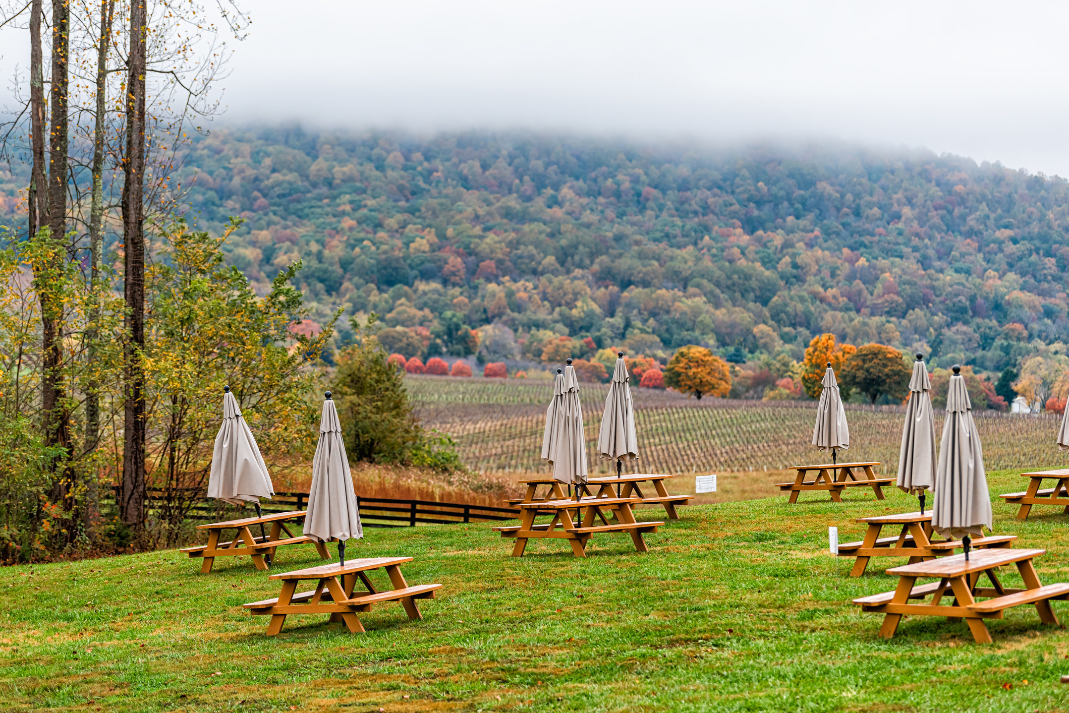Picnic tables at a winery in Charlottesville during the fall