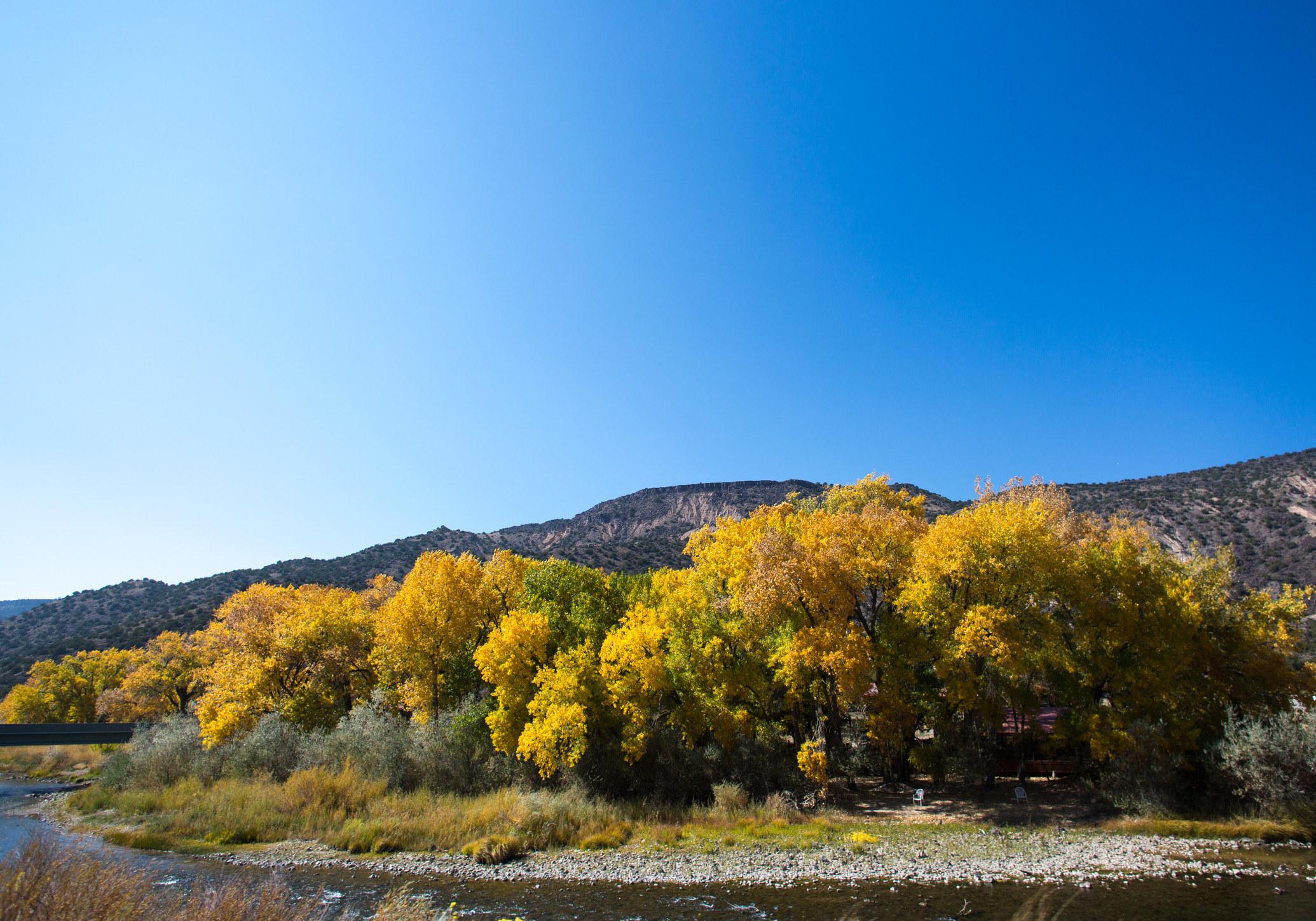 Foliage on the Rio Grande River
