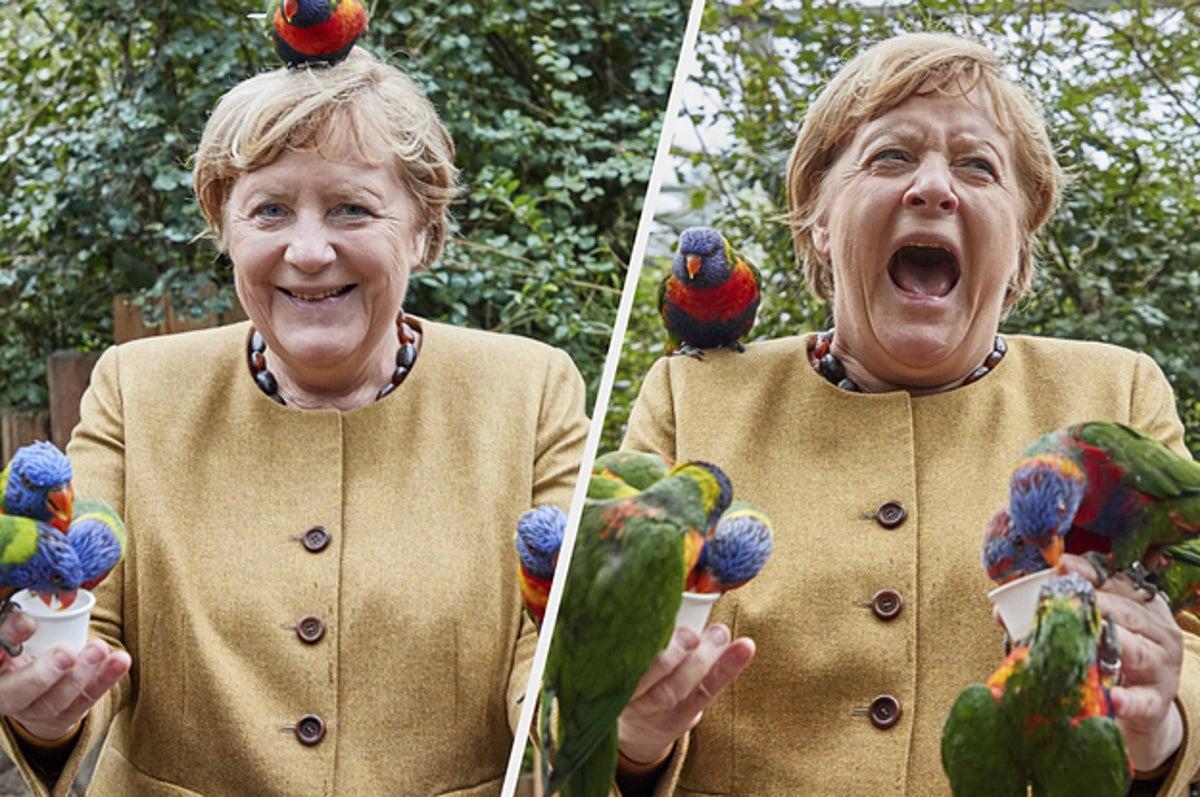 Danke Schön For These Photos Of Angela Merkel Getting Swamped By Birds