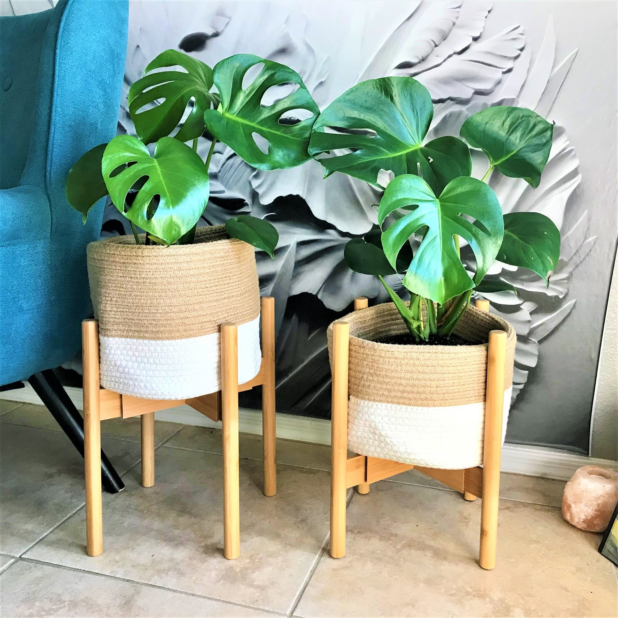 Wood plant stands holding plant