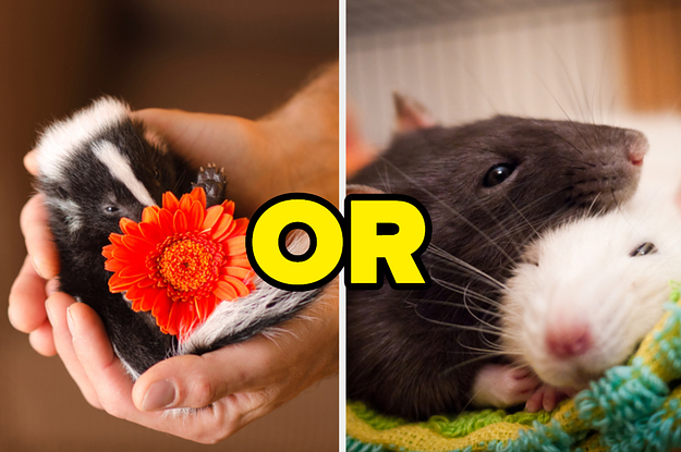 There Are A Lot Of Underrated Animals Out There, So Let's See Which One You Are