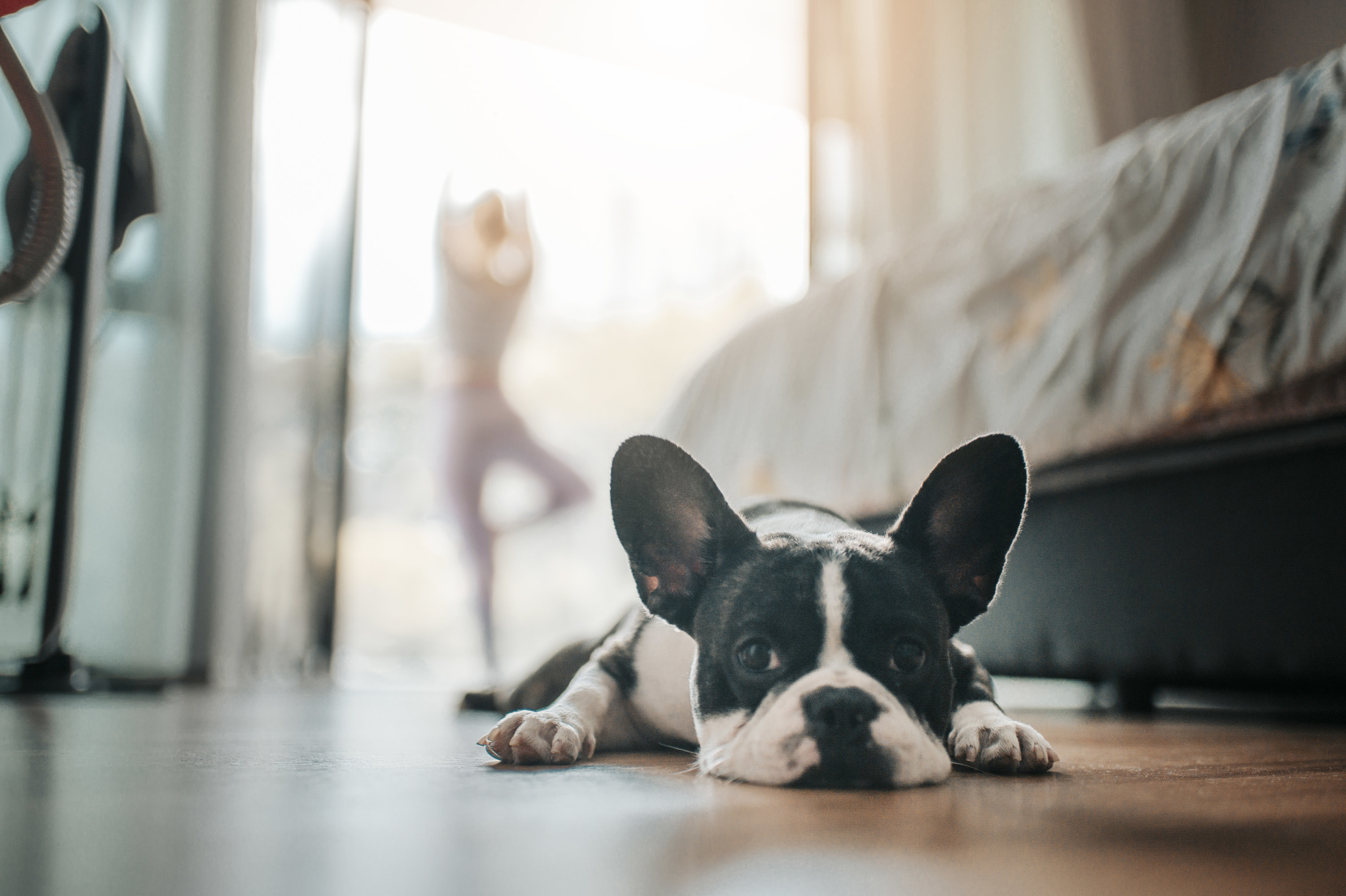 Small dog laying on the floor at home