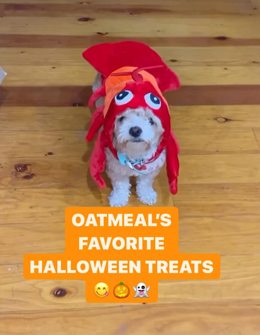 oatmeals favorite halloween treats