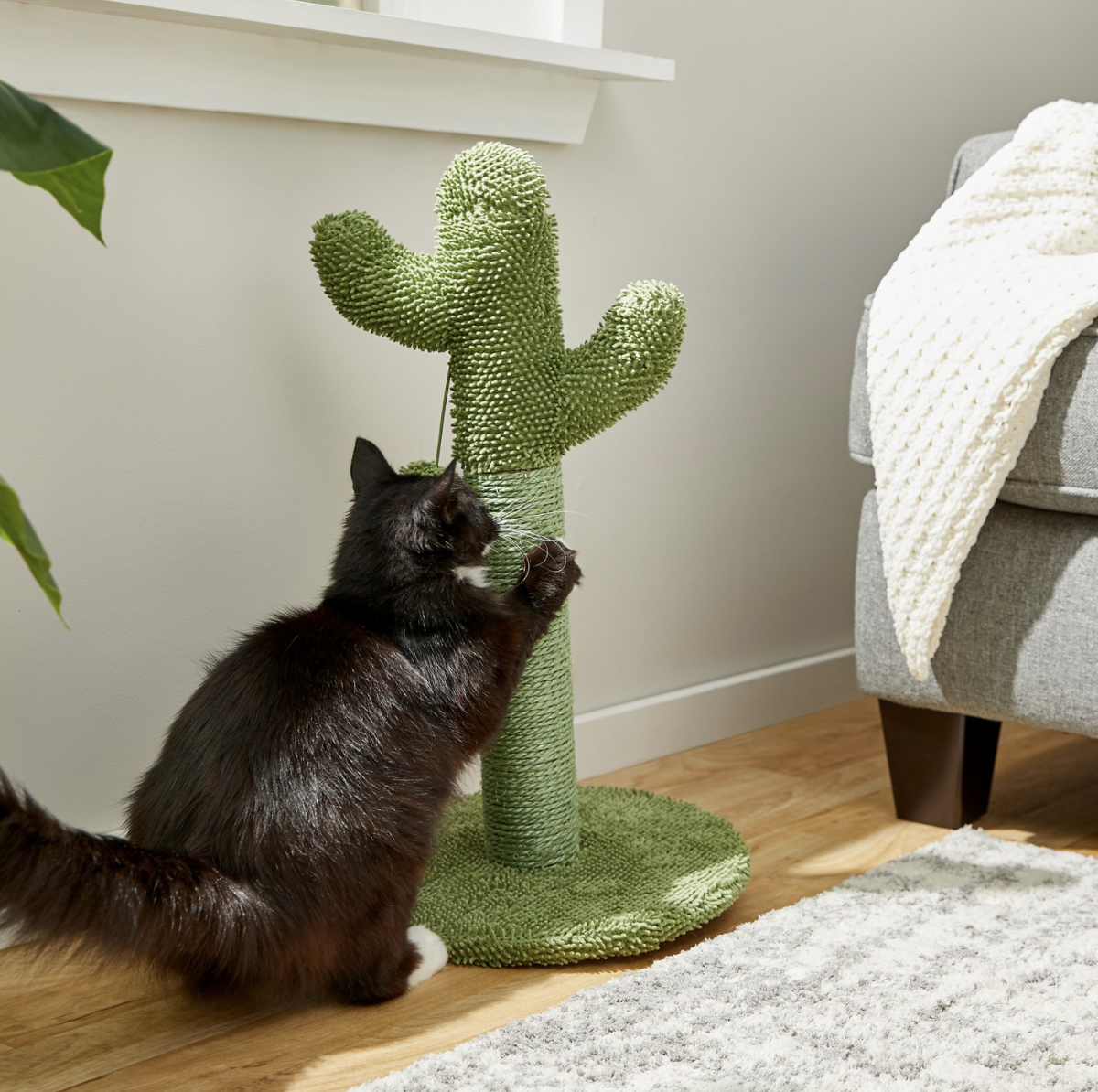 cat using cactus scratching post