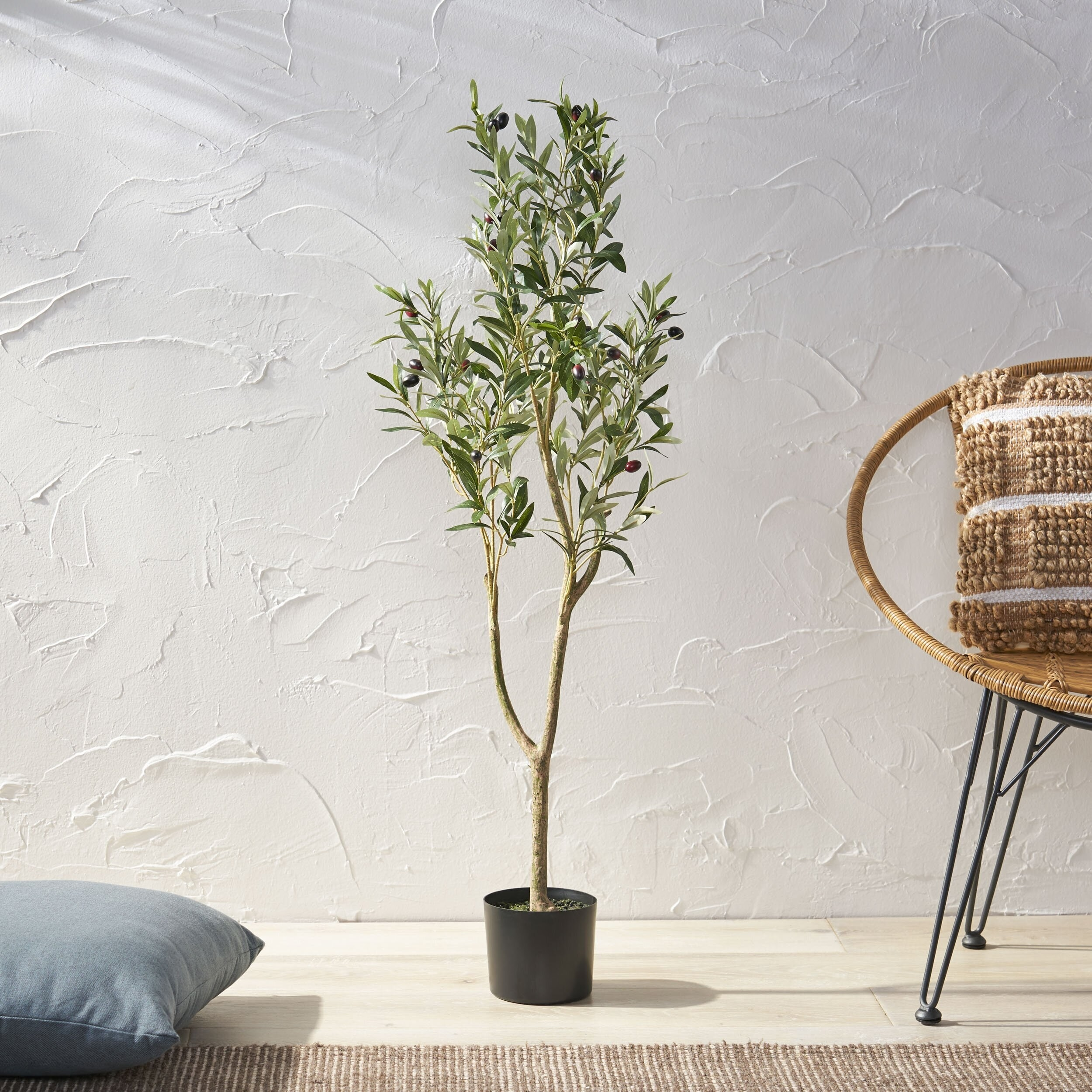 medium sized olive tree with several leafy branches
