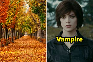 """A long tunnel surrounded by trees with their leaves changing colors and a close up of Alice Cullen from the """"Twilight"""" movie series"""
