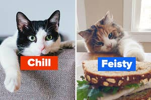 """Two cats are laying on a couch labeled, """"chill"""" on the left and """"feisty"""" on the right"""