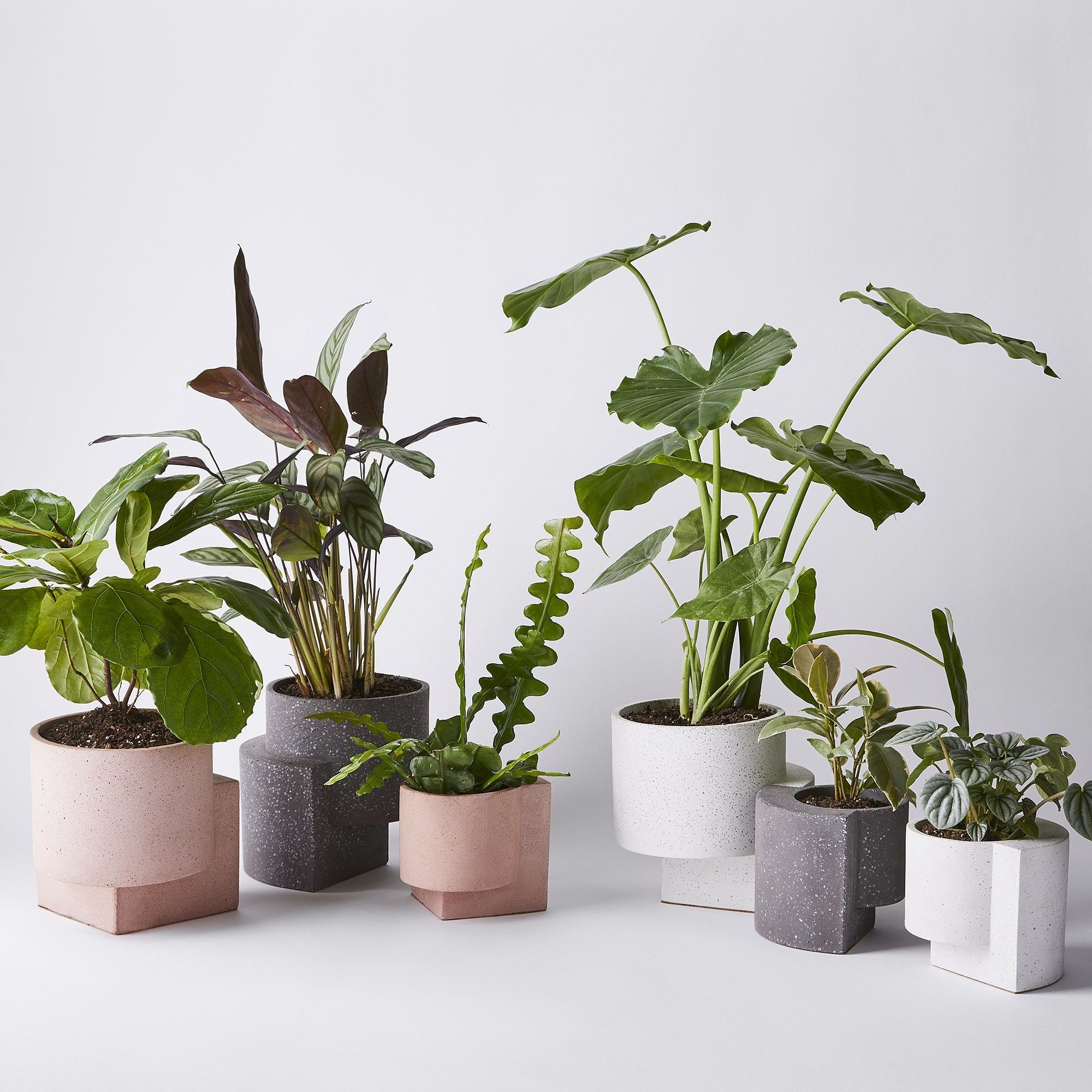 several classic vases with right angle base details. they are different sizes and colors and holding different plants.