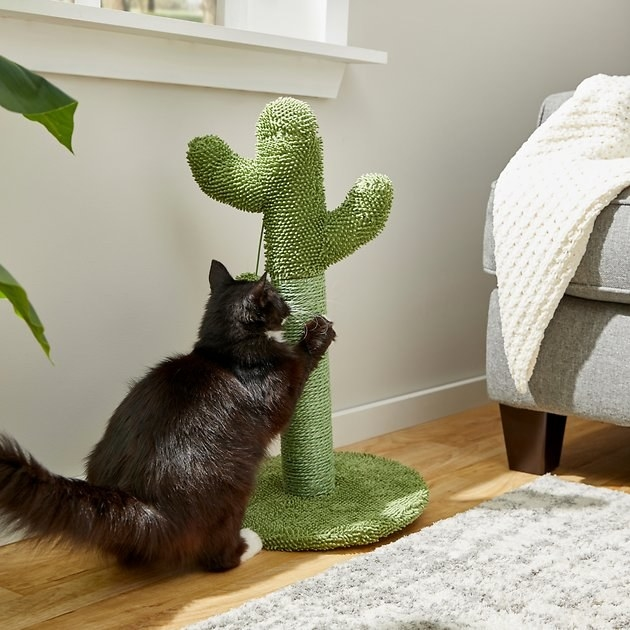 a cat using a cactus-shaped scratching post