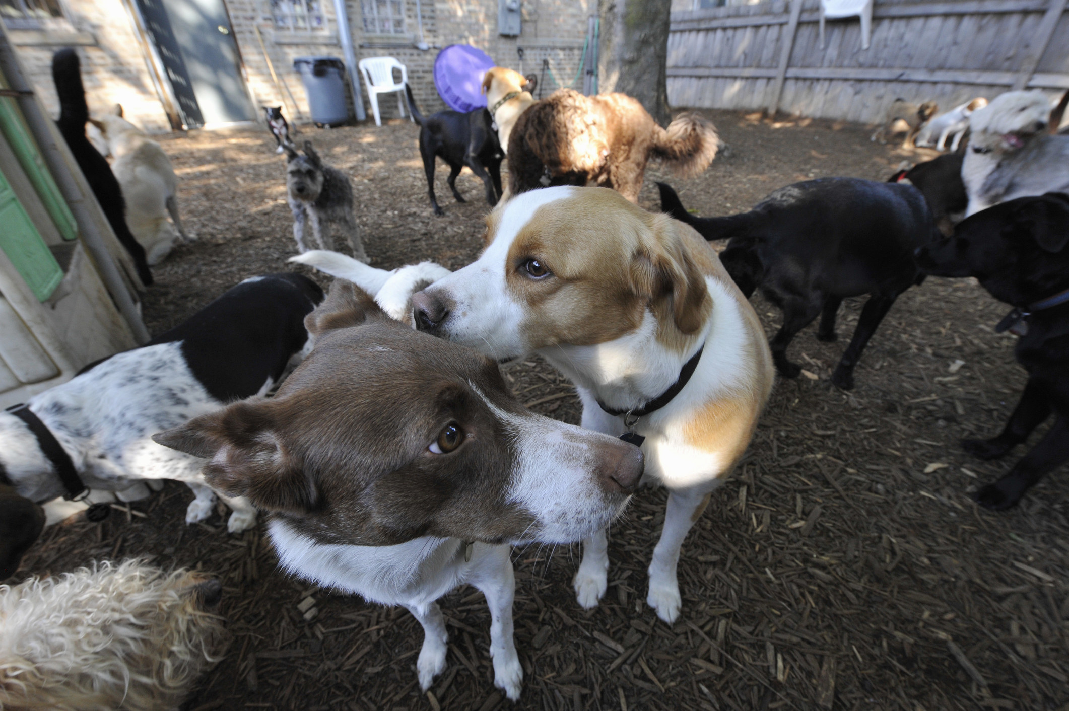 group of dogs at a dog park