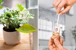 on left, leaf-shaped watering tool in plant. on right, hand scoops makeup out of jar with spatty tool