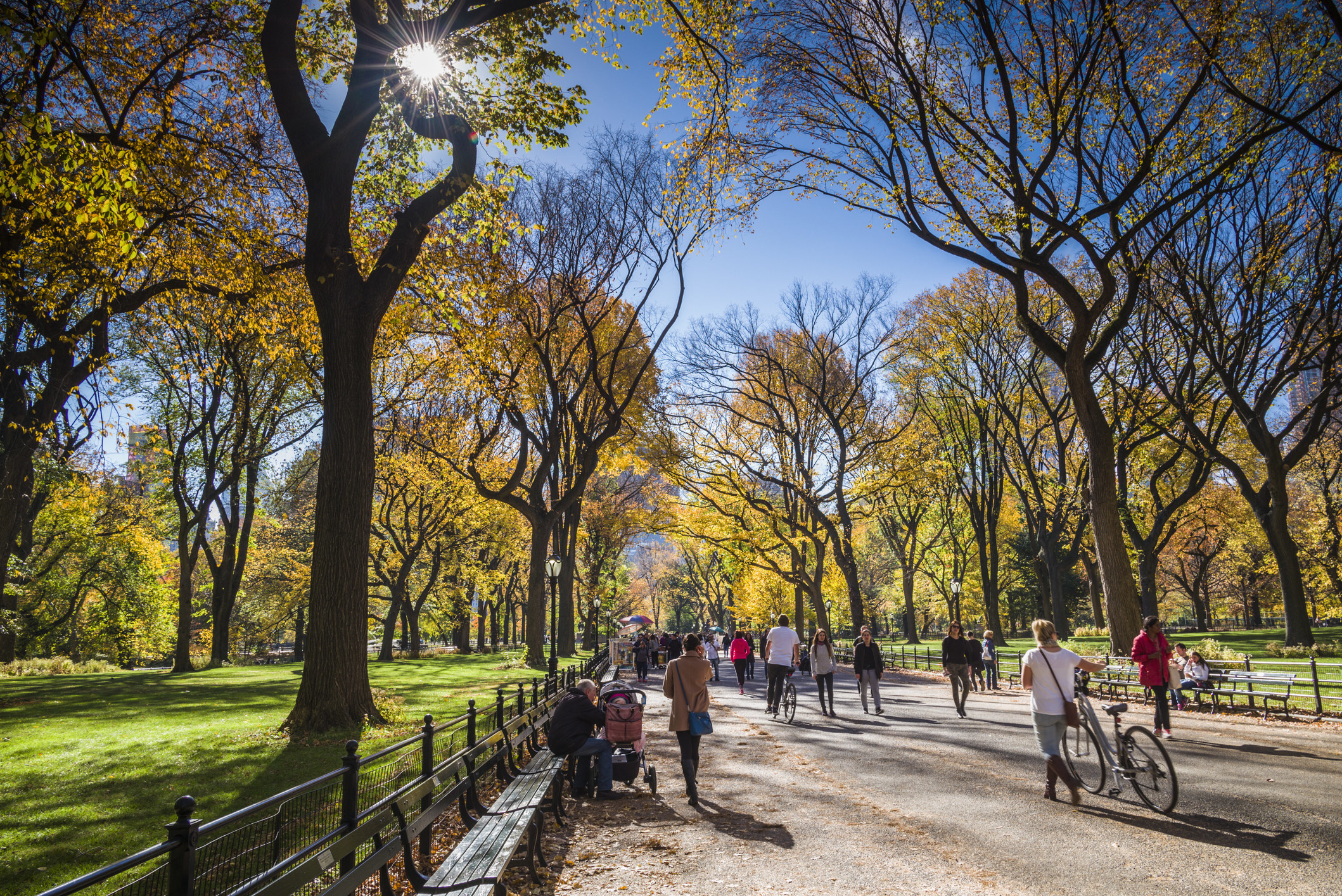 People walking in Central Park on a sunny day.