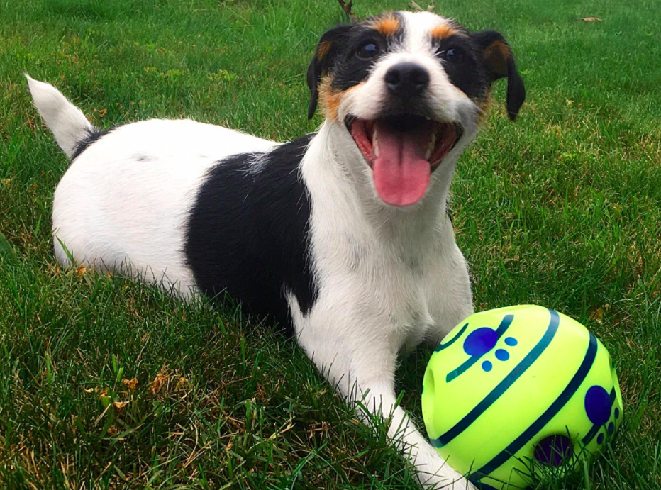 A customer review photo of their very happy dog with the ball