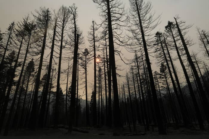 A wide-angle view of charred trees in a forest under a smoky sky