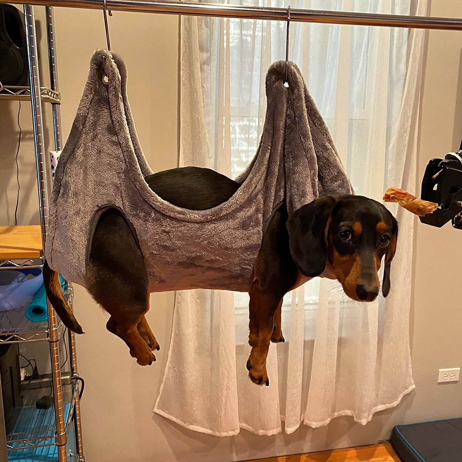 A reviewer's dachshund in the hammock with leg holes