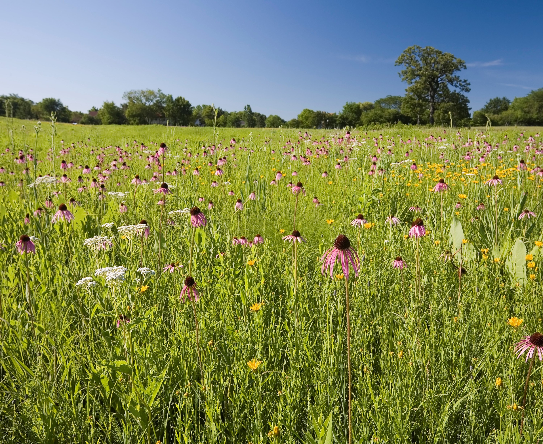 Field of flowers at The Morton Arboretum