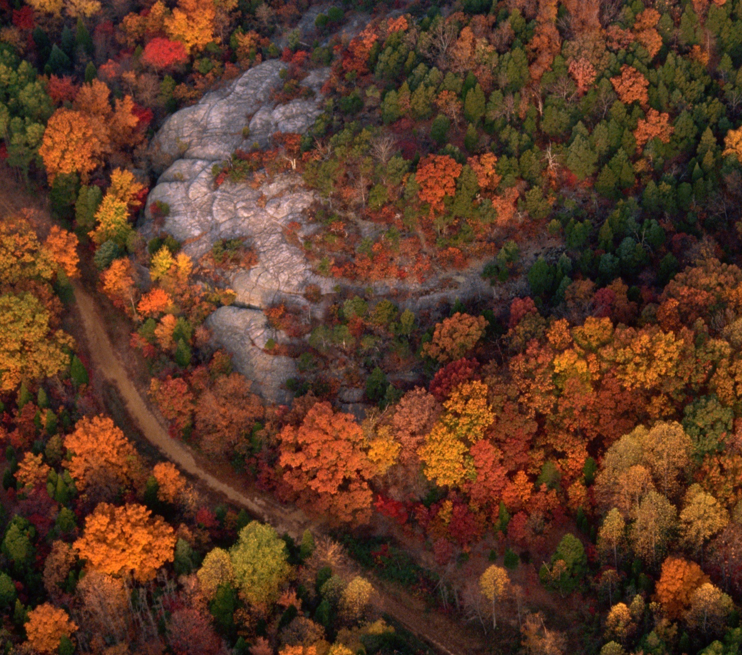 Aerial view of the national forest