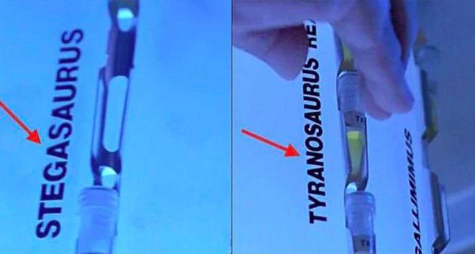 Stegosaurus is spelled S T E G A S A U R U S and Tyrannosaurus is spelled T Y R A N O S A U R U S