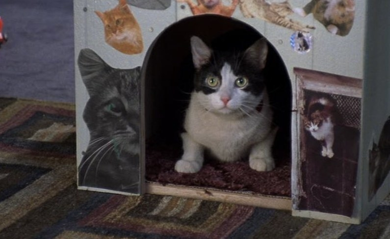 Fat Louie the cat sits in a cat house